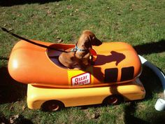 Just a dachshund in a weenie car. Dachshund Funny, Mini Dachshund, Daschund, Dachshund Puppies, Cute Puppies, Cute Dogs, Dogs And Puppies, I Love Dogs, Puppy Love