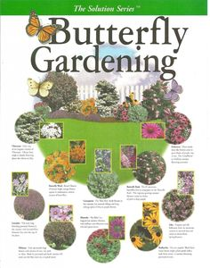 Butterfly Gardening Plan - create your own garden with this key map filled with the right plant combinations that attract butterflies Hummingbird Garden, My Secret Garden, Lawn And Garden, Terrace Garden, Garden Hammock, Moss Garden, Garden Bulbs, Garden Table, Garden Spaces