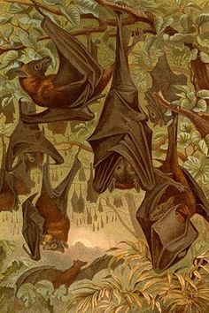 Hanging Bats. High quality vintage art reproduction by Buyenlarge. One of many…