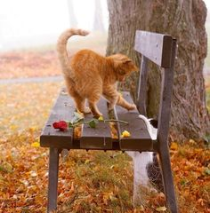 Orange tabby cat, bench, black and white cat Crazy Cat Lady, Crazy Cats, I Love Cats, Cute Cats, Kittens Cutest, Cats And Kittens, Gatos Cats, Orange Cats, Tier Fotos