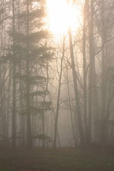 Living in the Blue Ridge Mountain, the forest does it's best to hide the sunrise through a thick fog