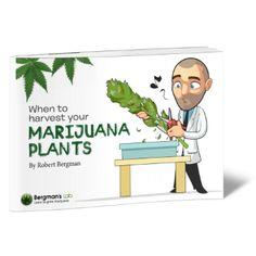 Learn to Grow Marijuana