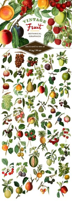 Vintage Fruit Botanical Graphics. Printables. $8.00