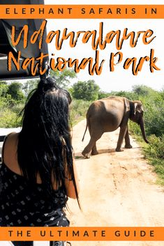 If you're taking an Udawalawe Safari to see wild elephant, this guide is for you! Prices, safari times, jeeps and what you can expect to see there too! Dog Travel, Asia Travel, Singles Holidays, Wild Elephant, Single Travel, Safari Theme, Travel Pictures, Travel Pics, Travel Ideas