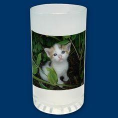 Tazza gattina -Kitty Mug by catphoto