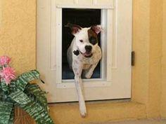 Exterior Door With Pet Door And Other Dog And Cat Door Solutions