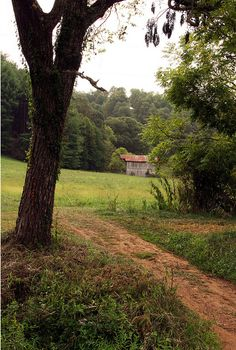 Path to the Shed, Roane County, West Virginia.
