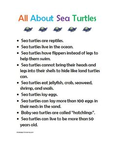 Sea turtle preschool fact sheet printable and other sea turtle craft and activit. - Sea turtle preschool fact sheet printable and other sea turtle craft and activity ideas - Turtle Facts For Kids, Sea Turtle Facts, Facts About Sea Turtles, Ocean Activities, Preschool Activities, Reptiles Preschool, Preschool Classroom, Preschool Art, Preschool Worksheets