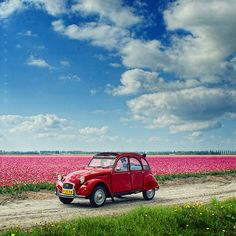 Volkswagen & Tulips...this should be our next girls getaway...not sure where it is, but sure I'd could be happy here:)