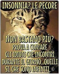 Come dare torto al gatto. I Love Cats, Crazy Cats, Funny Cats, Funny Animals, Italian Phrases, Sarcasm Humor, Funny Moments, Cat Lovers, Laughter
