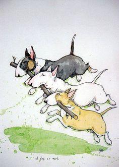 Krutrut English bull terriers three colours