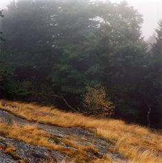 G R A S S D O E via http://grassdoe.blogspot.de/2012/08/blog-post_1461.html