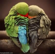 Birds snuggle for warmth