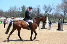 equestrianspiration.com William Fox-Pitt in the warm up on Seacookie TSF