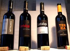 Diesmal haben wir Weine von Conti Zecca verkostet. Conti Zecca ist einer der berühmtesten Weinerzeuger Apuliens. Die Marke Conti Zecca hat eine fünfhundert Jahre alte Tradition. Deshalb und auch wegen ihrer stetigen Innovationen ist der Produzent so berühmt.