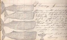 whalers logbook