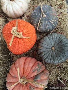 colorful pumpkins for fall // simplified bee #pumpkins #fall