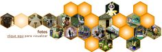 Vidas das abelhas – Polinização – Mel   Parque Cidade das Abelhas