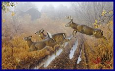 Whitetail deer - painting by wildlife artists Jerry Gadamus Wildlife Paintings, Nature Paintings, Wildlife Art, Whitetail Deer Pictures, Deer Photos, Wild Life, Aigle Animal, Hunting Art, Deer Hunting