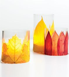 Dried Leaves + Spray Adhesive = Embellished Votives!  Get great votives and glass holders at Old Time Pottery!  See Mother Nature for the leaves!  http://www.oldtimepottery.com/