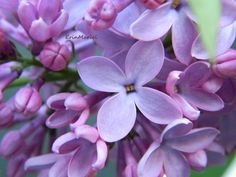 Top 10 most popular flowers Pictures Of Spring Flowers, My Flower, Flower Power, Beautiful Flowers, Most Popular Flowers, Lily Of The Valley, Gardening Tips, Orchids, Plants