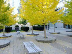 Yorkville Annex Toronto Townhall Square