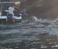 """""""O GRITO DO BICHO"""": Baleia desesperada pede ajuda a pescadores e posa para selfie - Sidney - Austrália"""