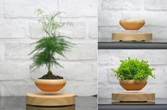 Levitating Air Bonsai Pot: Combine levitation and nature in one stylish piece. Connected to a power source, this magnetic wooden base and pot lift your plants to new dimensions.