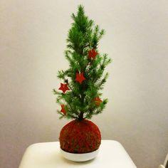 kokedama christmas tree with red stars