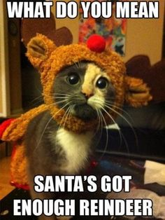 What do you mean santa s got enough reindeer cat reindeer santa