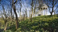 The Ionic Rotunda surrounded by daffodils in the Pleasure Grounds at Petworth House