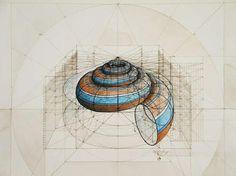 Preciosas espirales!! | Matemolivares