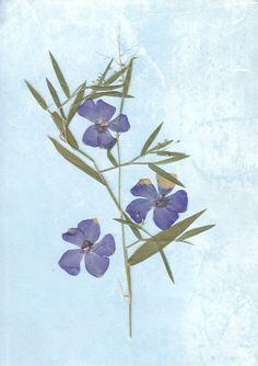 Blue fantasy  Original Pressed Flower Art by SmileWithFlower