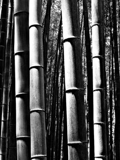 Bamboo forest in Kyoto, Japan. Been there. Took that same picture.
