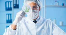 Researchers note that CBD may help in cancer treatment because of its low toxicity levels. They call for it to be studied along with standard treatments, to check for synergistic effects.