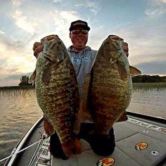 Mega Smallmouth bass! #Fishing #Minnesota #Bass #FinandField