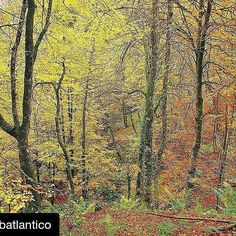 Repost @jbatlantico ・・・ ♪ ♫  OTOÑO LLEGÓ / MARRÓN Y AMARILLO ♩ ♬ ♪ ♫  OTOÑO LLEGÓ / Y HOJAS SECAS DE LLEVÓ ♩ ♬  Canta: @mariaherediaa  #Otoño #Autumn #Fall #HojasSecas #AutumnLeaves #Jardín #Botánico #Atlántico #Atlantic #Botanic #Garden #Gijón #Xixón #Asturias #Asturies #AsturiasConSal #GijonAsturiasConSal #GijonNorthernSpainWithZest #GijonleNorddelEspagnequipetille #Turismo #Tourism