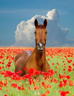 Horse in a flowery field.