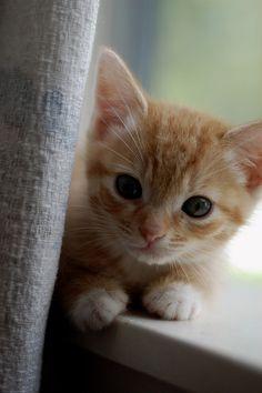 window perch #kittens