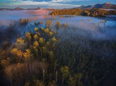 Styx Forests, Tasmania by Rob Blakers