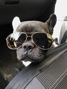They see me rollin', they hatin', Fabulous French Bulldog , https://i.redd.it/g4v4bc9sxz6z.jpg #buldog