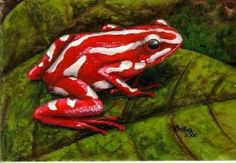 Red & white, and you guessed it poisonous! (they are poisonous due to their diet in their natural habitat~ not when domestically raised)