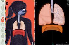 Menschliche Körper - Anatomie App für Kinder