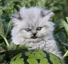 """Woah, who put this watermelon here?!"""