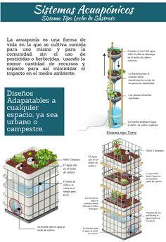 Sistemas Acuaponicos DIY