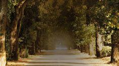 Poggio al Tesoro - Allegrini, near Bolgheri, Tuscany, Italy. The Valley of the Cyprus Trees.