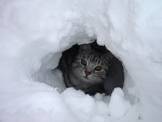 Kitty.  http://www.telegraph.co.uk/news/picturegalleries/uknews/6937587/Readers-snow-pictures-photos-of-winter-weather-in-Britain-sent-in-by-Telegraph-readers.html?image=3