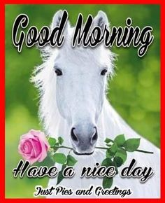 Good Morning Have A Nice Day Quote With A Horse morning good morning morning…