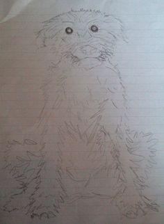Start of a scruffy dog project