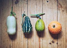 Growing my own veggies. Beautiful pumpkin varieties.